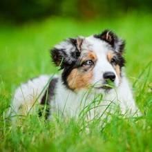 5 powodów, dla których pies je trawę