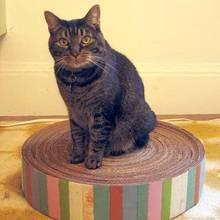 Jak zrobić matę dla kota z kartonu?