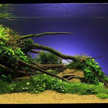 Jak zrobić korzeń do dekoracji akwarium?
