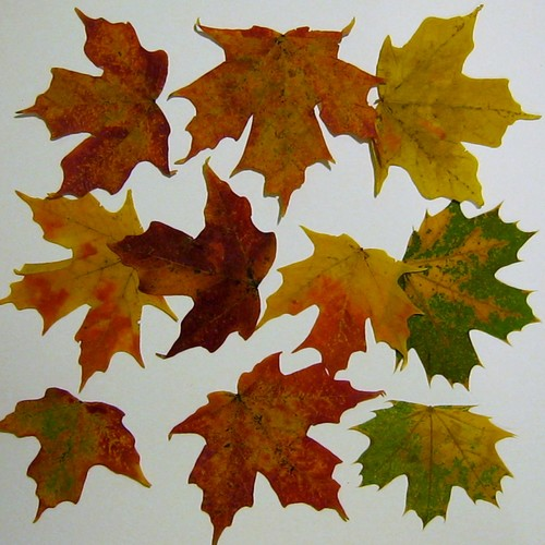 Jak zrobić kartkę z jesiennymi liśćmi?