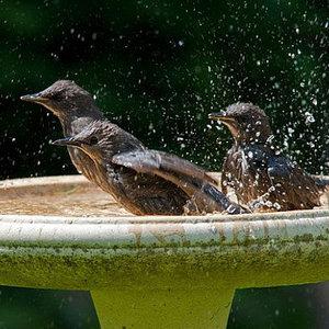 Jak zrobić ładne poidełko dla ptaków?