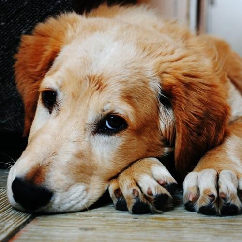 Skuteczne sposoby wprowadzania oleju do diety psa