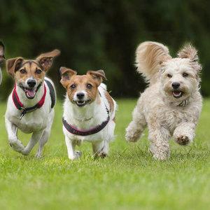 W jaki sposób pielęgnować psa?