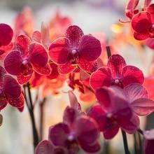 Podstawowe zasady przesadzania orchidei