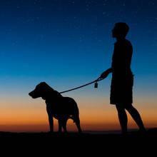 Pies w mieście – obowiązki właściciela