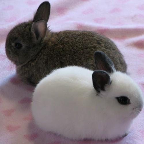 Adopcja króliczka