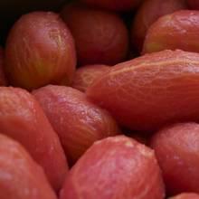 Podstawowe zasady parzenia i drylowania pomidorów