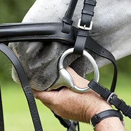 Kiełznanie konia – krok trzeci