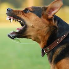 Jak bronić się przed agresywnym psem?