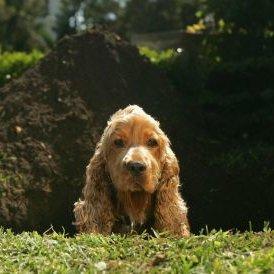 Co zrobić, żeby pies nie kopal dołów w ogrodzie?