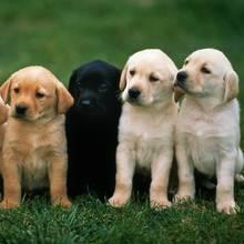 Domowe sposoby na pchły u psów
