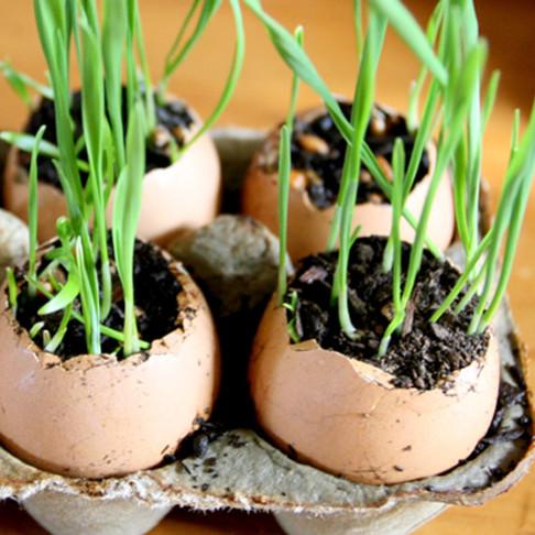 Jak zasiać trawkę ozdobną w skorupkach jaj?