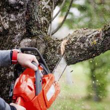 Przycinanie gałęzi drzew – podstawowe zasady