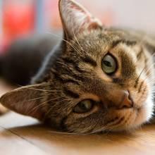Sposób zachęcenia chorego kota do jedzenia