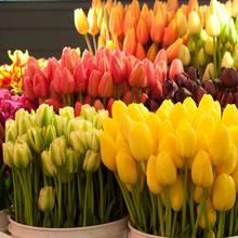 Łatwy sposób pielęgnacji ciętych kwiatów