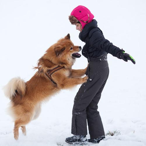 Co zrobić, żeby pies nie skakał na gości?