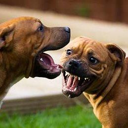 Czy każdy konflikt między psami jest niebezpieczny?