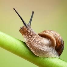 Skuteczne sposoby zwalczania ślimaków