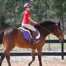 Jak rozpocząć naukę jazdy konnej?
