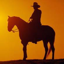 Jeździectwo – podstawowe pojęcia