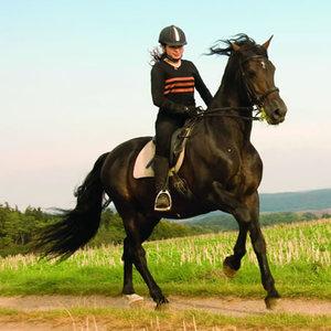 Chody koni