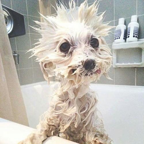Jak łatwo wykąpać małego psa?