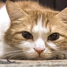Jak rozpoznać chorobę u kota?