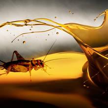 Jak zrobić skuteczny odstraszacz na insekty z olejków eterycznych?