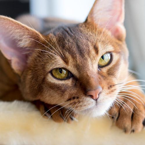 Ciekawa zabawka dla kota – patyczek z piórkami