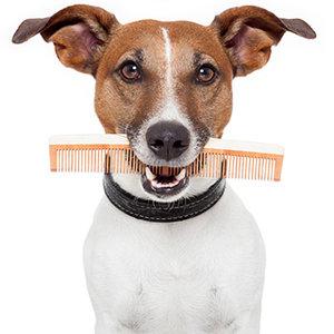 Jak postępować w czasie linienia psa?