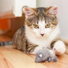 Jak zorganizować zabawę z kotem?