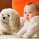 Jak dobrze przygotować psa na pojawienie się dziecka?