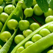 Podstawowe zasady sadzenia groszku