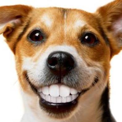 Jak dbać o uzębienie swojego psa?