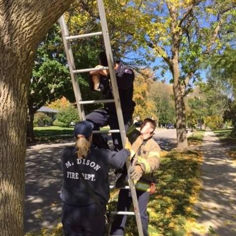 Jak wejść na drzewo bez gałęzi