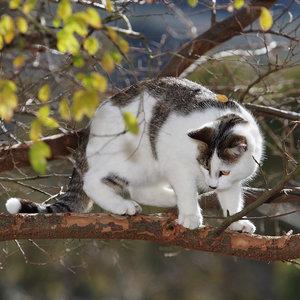 Jak zdjąć kota, jeśli nie zejdzie sam?