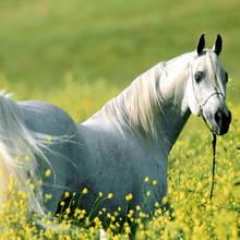 Które rośliny są trujące dla koni?
