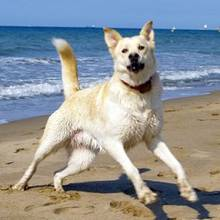Co robić, aby pies się nie przegrzał?
