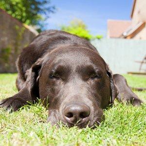 Objawy udaru cieplnego u psa