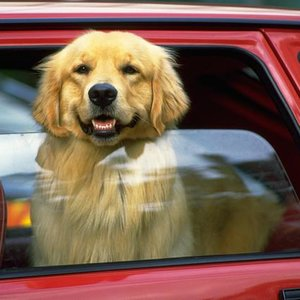 Nie pozostawiajmy psa w samochodzie