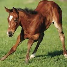 Co warto wiedzieć o końskich nałogach i narowach?