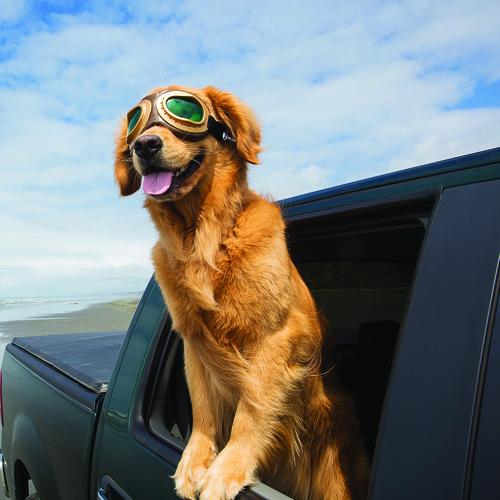 Jak poprawnie przygotować się do podróży z psem?