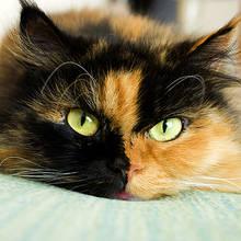 Opieka nad kotką po sterylizacji – podstawowe zasady