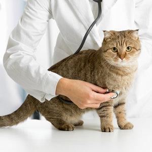 Jak dbać o samopoczucie kotki?