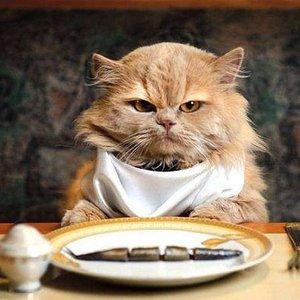 Skuteczne sposoby na nauczenie kota jedzenia mokrej karmy