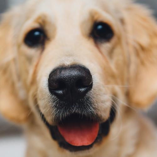 Jak zdiagnozować alergię u psa?