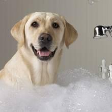 Jak przygotować dobry szampon dla psa?