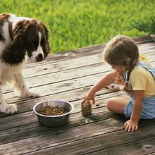 Jak przygotować domowe jedzenie dla psa?