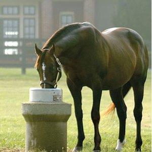 Pojenie konia