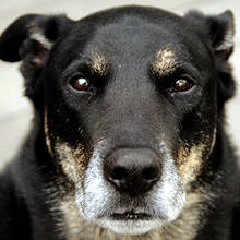 Opieka nad starym psem – podstawowe zasady